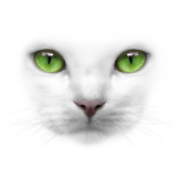 Green Eyes White Cat