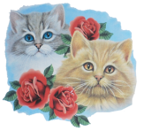 Cats with rose