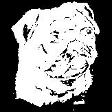 Scratchboard Pug
